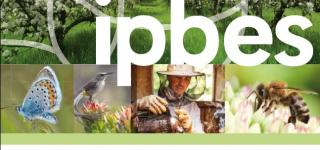 Pollinators, pollination and food productor